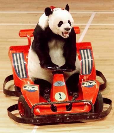 Play Driving Panda